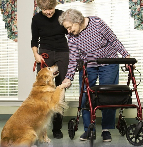 The Therapy Dogs Animal Assisted Therapy International
